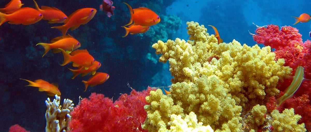 Egypt 2008 - ryby a korály